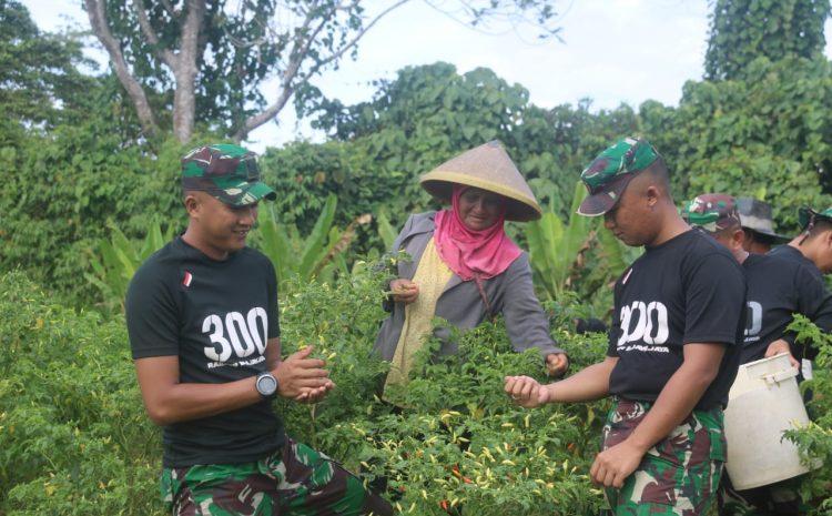 Satgas Raider 300 Membantu Masyarakat Panen cabe